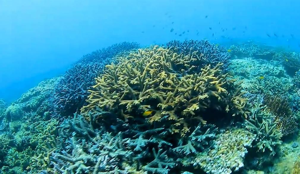 宜野湾市沿岸のサンゴ礁