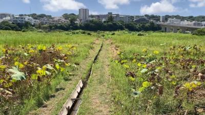 「農業と食の繋がり」宜野湾市地域コーディネーター養成講座(第4回)が開催されました!!
